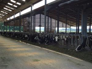 Neil Baker, Amerikaanse opzet met 1500 koeien in Engeland. Draait top resultaten+ +11 000 l per koe.