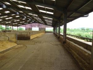 Westcombe Dairy is een melkveebedrijf met +/-300 koeien en de melk wordt eigenhandig verwerkt in het streekproduct Cheddar. De koeien van Westcombe Dairy lopen tijdens de zomerperiode in de weide wat een speciale smaak geeft aan de kaas. De kaas wordt verkocht in kaasspeciaalzaken verspreid over geheel het Verenigd Koninkrijk. Het is een vader-zoon bedrijf.
