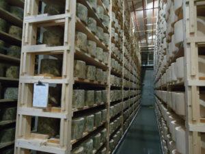 Rijpingskamers voor de Cheddar waarin een jaar melkgeld ligt opgestapeld. Men is gestart met 1000 kg Cheddar per jaar en nu wordt alle melk hierin verwerkt.